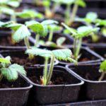 Plants biologique