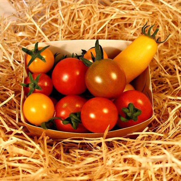 tomates cerises bio panier local dinan
