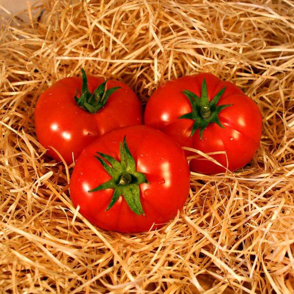tomate bio panier local dinan evran