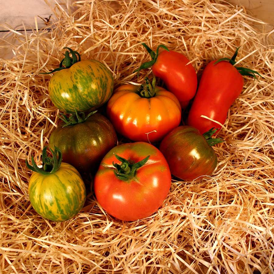 tomates anciennes bio panier local dinan evran