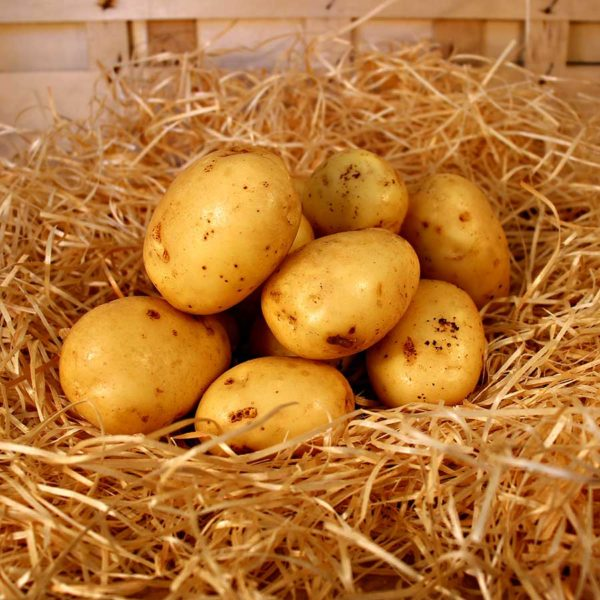 pomme de terre bio local panier