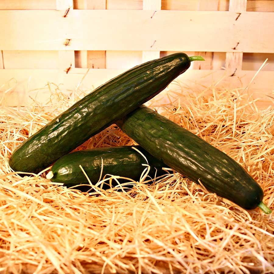 concombre bio panier saison dinan evran