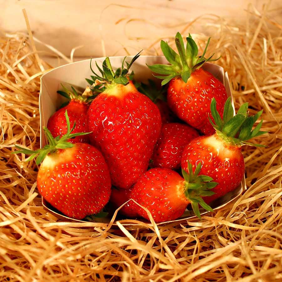 fraise bio panier local evran dinan