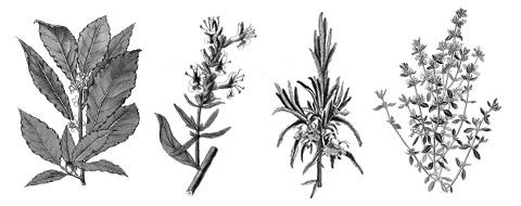 herbes aromatiques bio commande en ligne