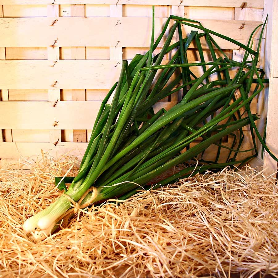 oignons ciboule botte bio panier saison local dinan evran