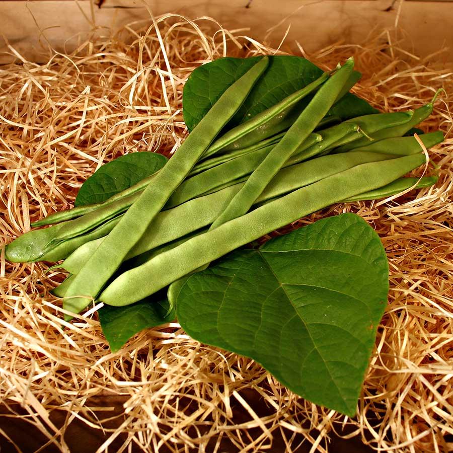 haricot vert bio commande en ligne panier bio evran dinan