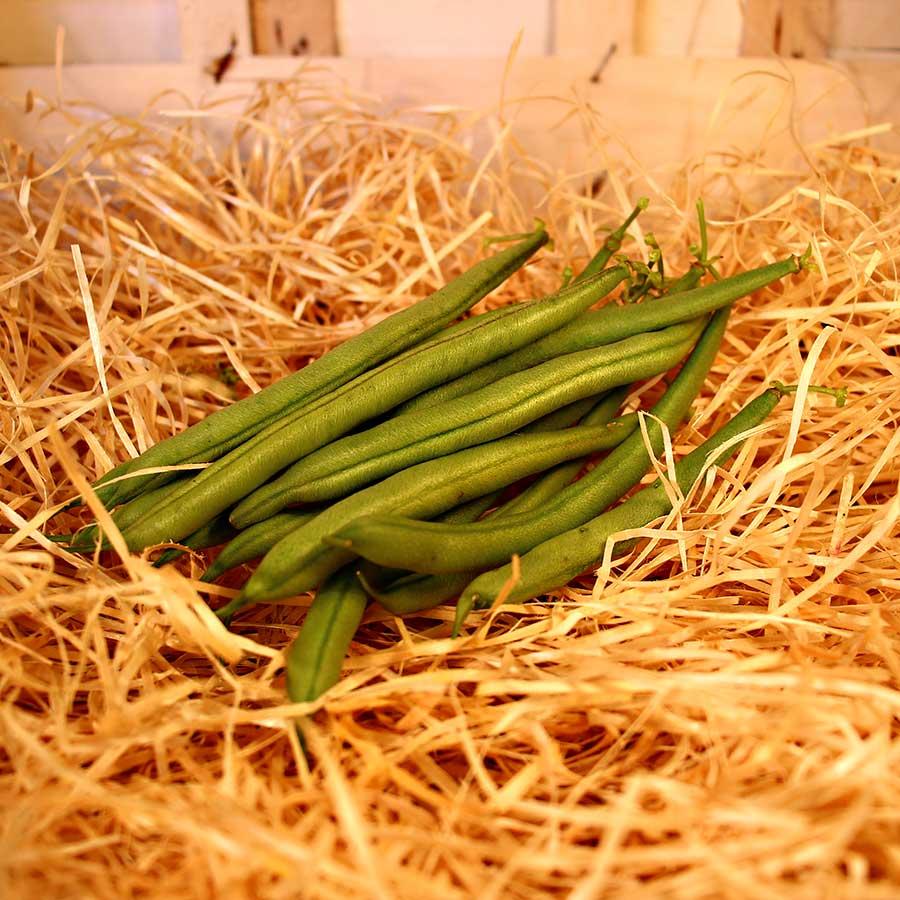 Haricot vert bio evran dinan producteur local