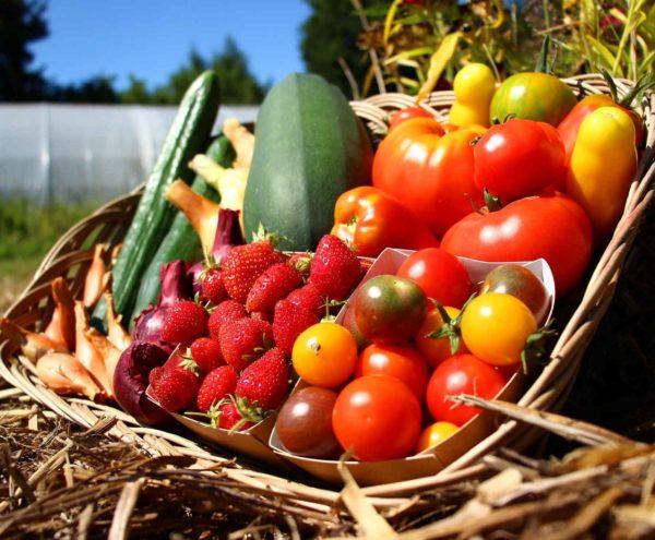 fruits légumes bio dinan evran panier local