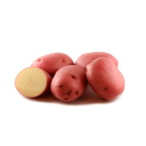 pommes de terre désirée bio