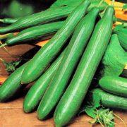 plan bio bretagne 22 dinan evran concombre tanja