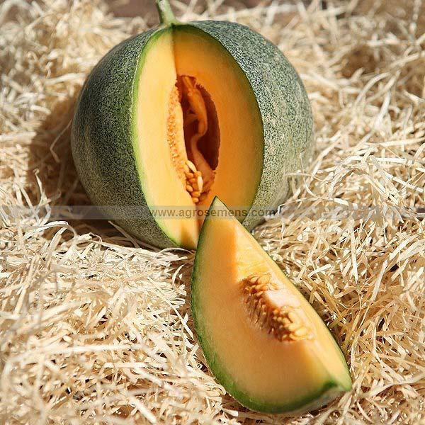plan bio bretagne 22 dinan evran melon petit gris de rennes