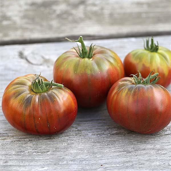 plan bio bretagne 22 dinan evran tomate noir de crimée