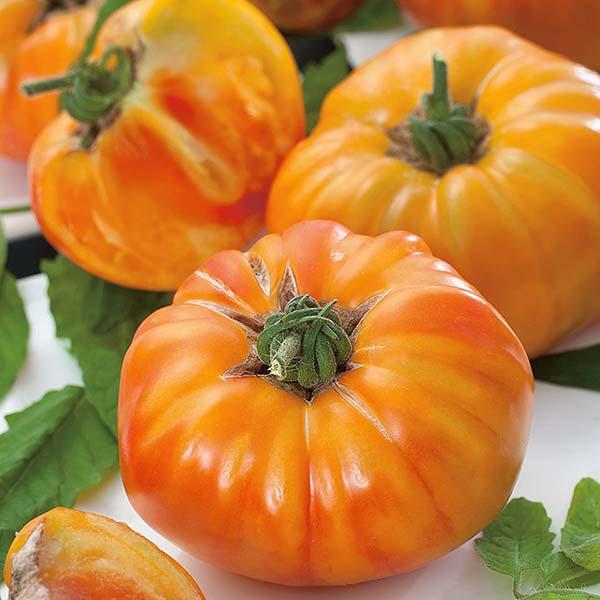 plan bio bretagne 22 dinan evran tomate ananas