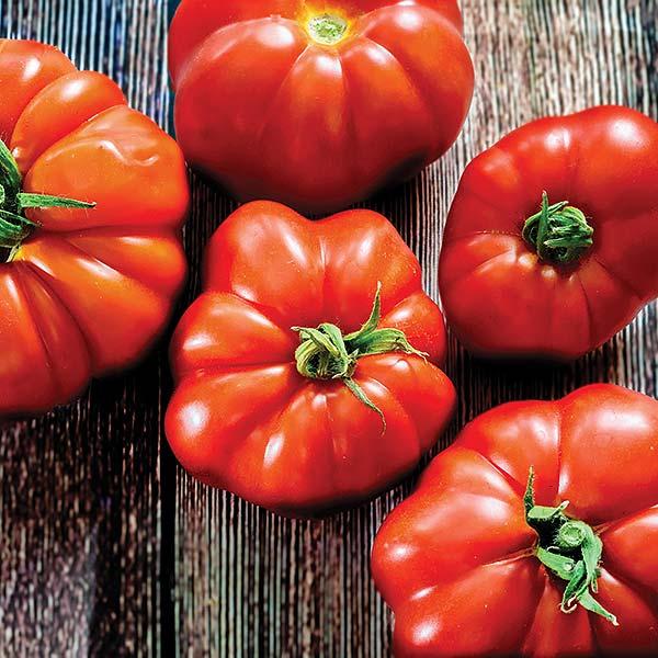 plan bio bretagne 22 dinan evran tomate marmande