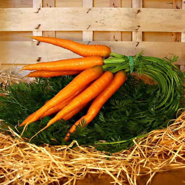 carotte nouvelle bio