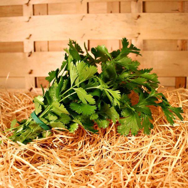 bouquet coriandre bio commande en ligne panier local