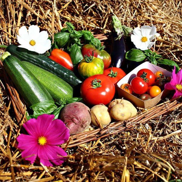 panier bio local saison commande en ligne dinan evran