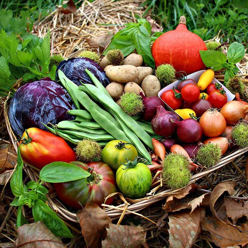 Panier bio et local de saison evran dinan